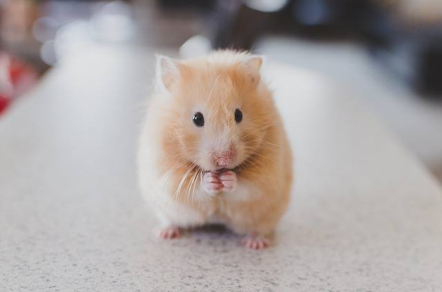 all hamster facts
