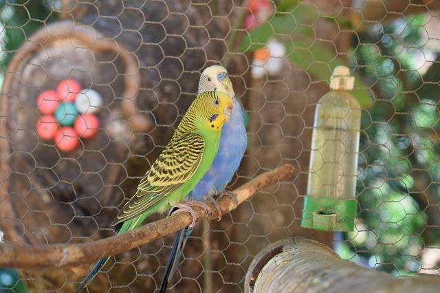 parakeet on cage