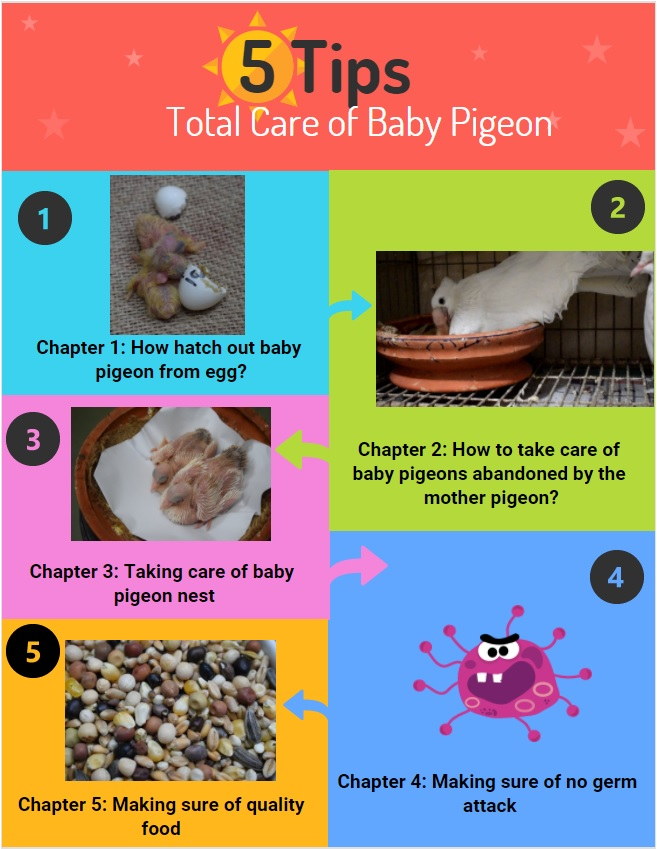baby pigeon total cares