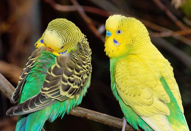🥇🐦Top 10 Best Parakeet Cages 2019 - Comfortable & Hygienic Cages