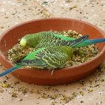 🥇🐦14 Best Parakeet Food - Fresh Nutritious Ideal Food For Your Bird's Health
