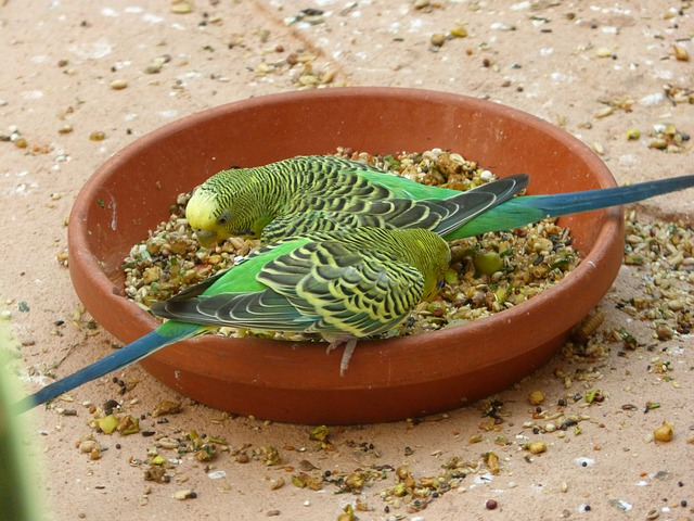 14 Best Parakeet Food – Fresh Nutritious Ideal Food For Your Bird's Health