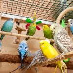 🥇🐦Top 10 Best Parakeet Toys To Buy For Your Birds Enjoyment in 2021 Reviews & Buying Guide
