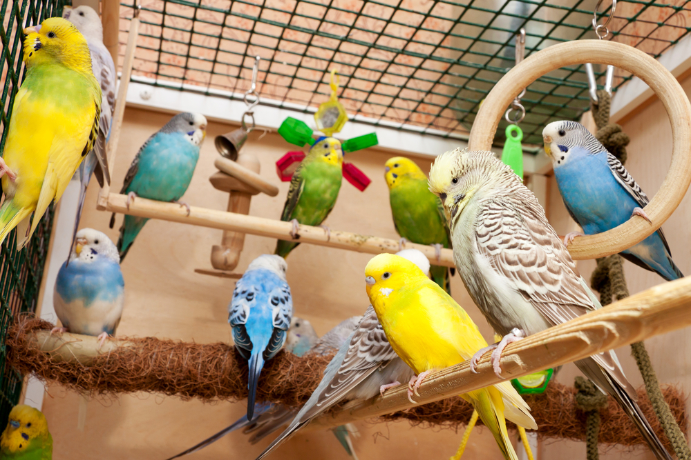 Top 10 Best Parakeet Toys To Buy For Your Birds