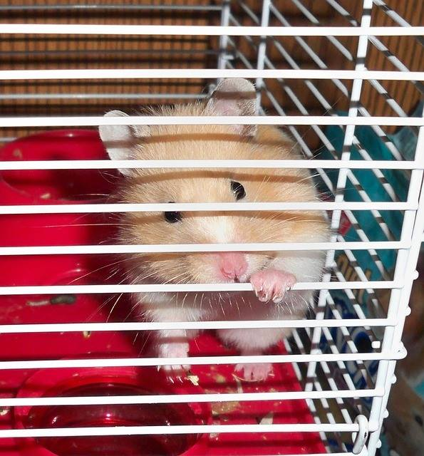 hamster cage syrian