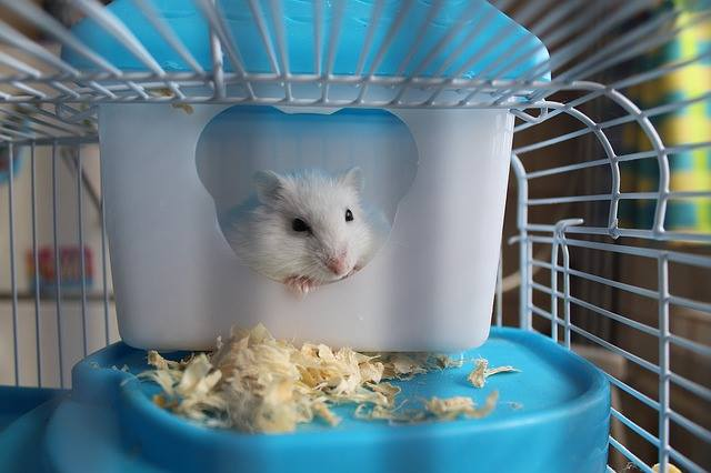 best cage of hamsters