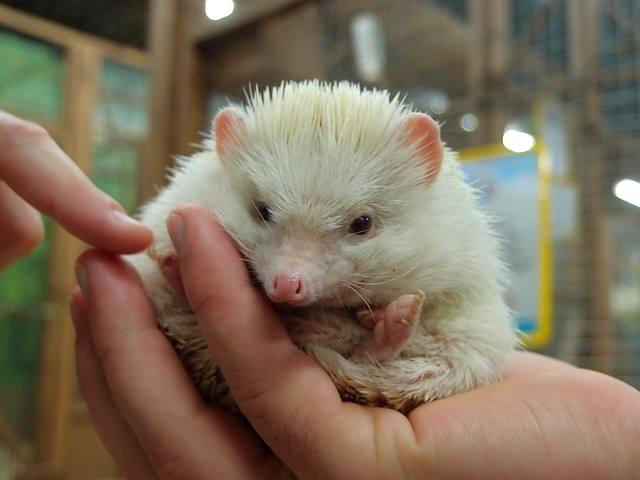 best cages hedgehog