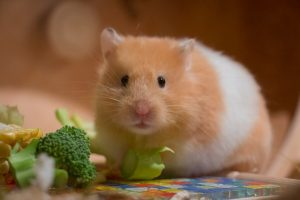 Amazing 12 Best Hamster Cages Reviews And Buying Guide