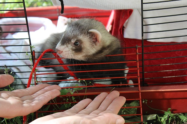 Best ferret cages