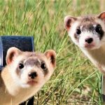 🥇🐹The Amazing 10 Best Ferret Cages For Your Lovely Pet 2021 Reviews and Buying Guide