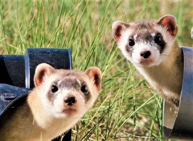 The Amazing 10 Best Ferret Cages For Your Lovely Pet 2019 Reviews and Buying Guide