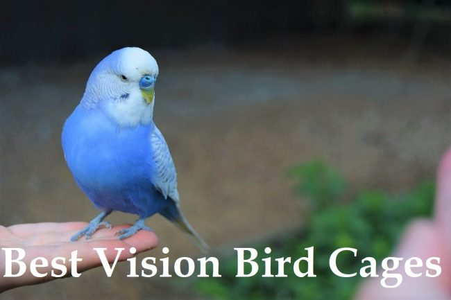 best vision bird cages