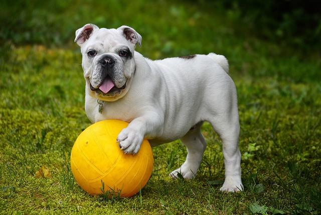 dog breed usa