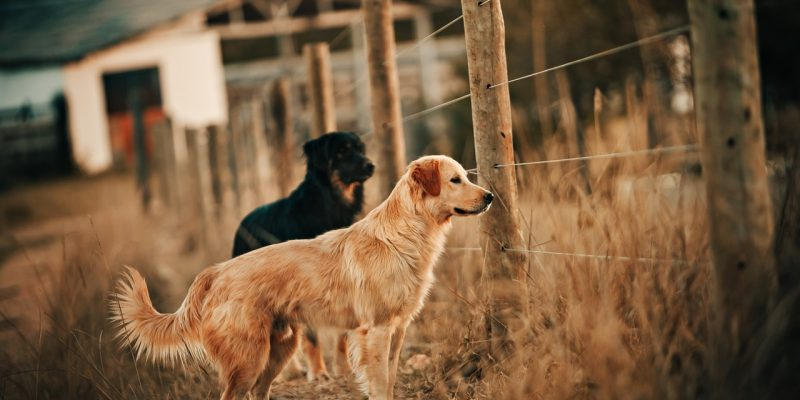 5 Reasons Why I Bought an Invisible Dog Fence