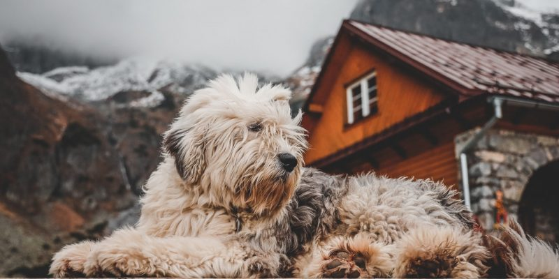 Dog House Designs That Will Fit Your Living Room Theme