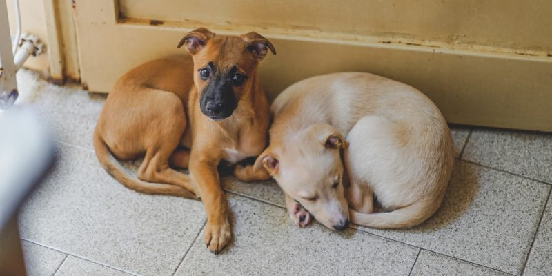 Adopt, Don't Shop: 8 Ways to Prepare Your Home for a Rescue Dog
