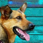 5 Must-Have Items for German Shepherd Pet Owners