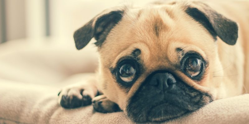 An Owner's Guide To Alleviating Stress In Dogs