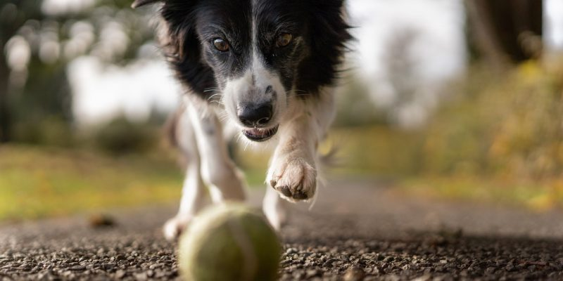 CBD Oil for Dogs & What They Are Good For